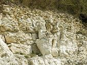 stock photo of falcons  - Adult Peregrine Falcon on chalky cliff face in southern England - JPG