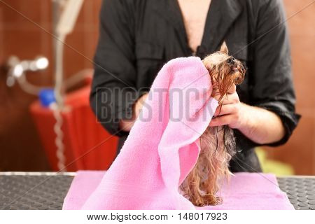 Canine hairdresser wiping dog with towel at salon