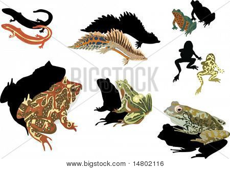 illustration with frogs and newts on white background