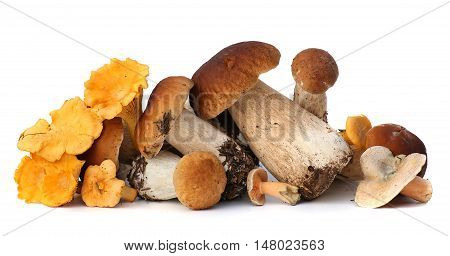 Wild Foraged Mushroom selection isolated on white background, with shadow. Boletus Edulis mushrooms over white background