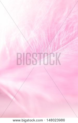 soft focus on fluffy pink feather background.
