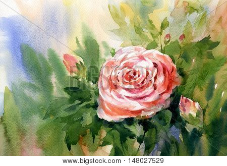 Watercolor painting of rose pink valentine  romantic