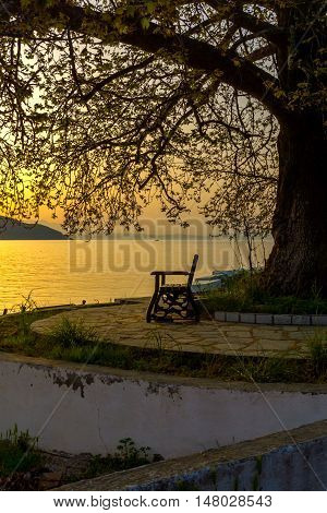 Sunset on embankment and tree in Thassos town, East Macedonia and Thrace, Greece