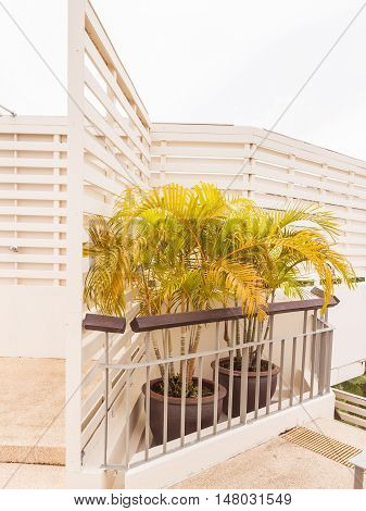 Garden in planter box on roof top of building Phuket Thailand