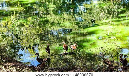 flock of brown birds on the shore of a pond