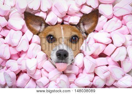 Dog Love Valentines