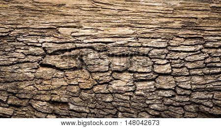 Cracked and rotten wood plank texture background