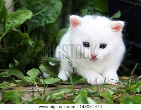 White fluffy adorable tabby kitten on rural yard background