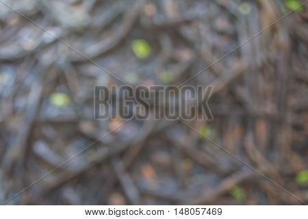 Blurred pattern of wet tree root network on the ground.