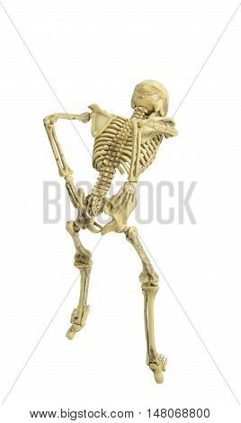 skeleton low back pain isolated add clipping path