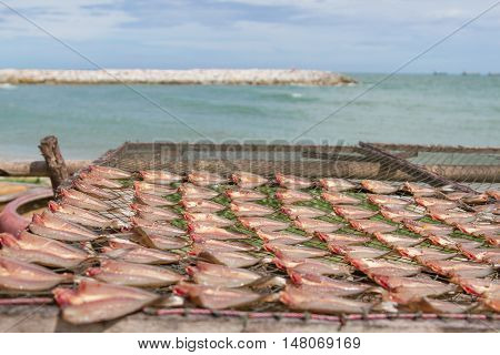 Natural drying of stockfish on the beach near seawall in fishing village of Rayong Thailand .