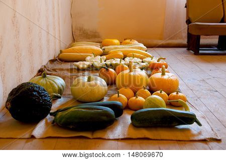 bountiful autumn harvest of many pumpkin sorts and colours