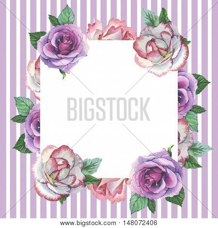 Wildflower rose flower frame in a watercolor style isolated. Full name of the plant: rose, platyrhodon, rosa. Aquarelle flower could be used for background, texture, pattern, frame or border.