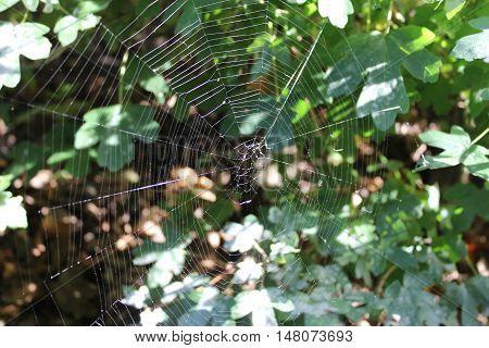 The spider web or cobweb closeup - autumn, warm September