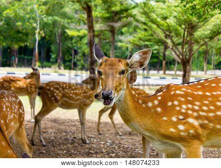 Deer patterned lovely spot deer in the wild.