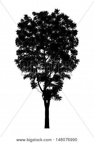 silhouette a tree silhouette Isolated on white background clipping path