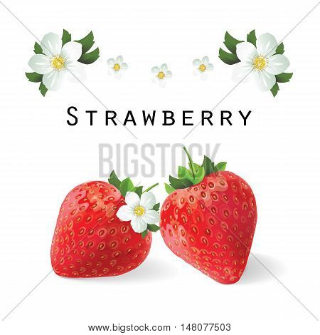 Strawberry. Flowers strawberries. Vector illustration isolated macro