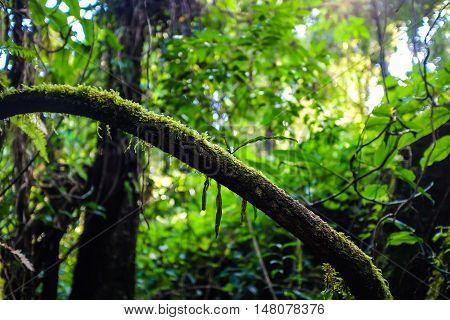 Tropical Rain Green In Deep Forest