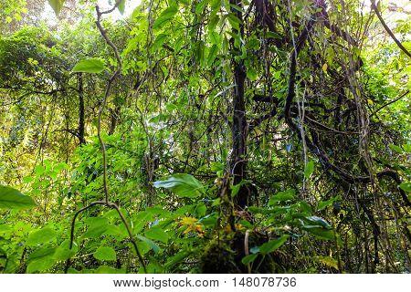 Sun Shining Into Green Fern Tropical Deep Forest