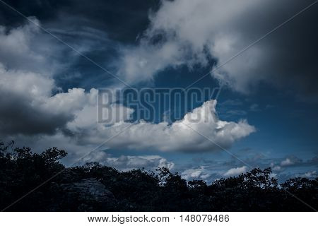 View of tree and dramatic blue sky. Natural landscape background. Silhouettes of tree and nighttime sky with clouds outdoors.