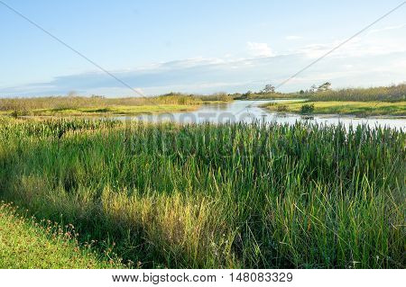 beautiful marsh with long grass and river