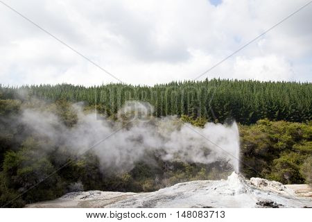 Eruption of Lady Knox Geyser on the North Island in New Zealand