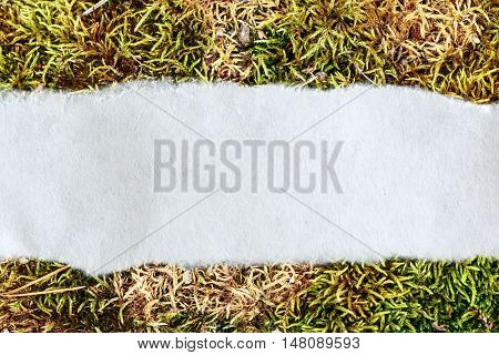 Ragged Piece Of Paper On Moss