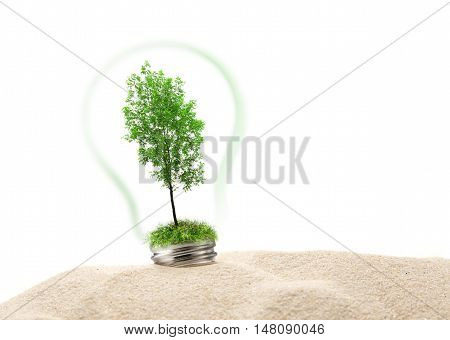 Green Ash Tree In Lamp On Sand