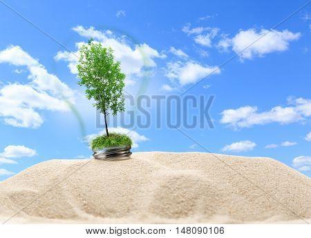 Green Ash Tree Inside Lamp In Sand