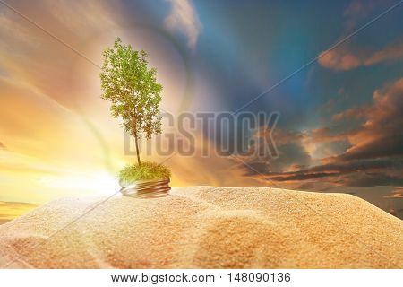 Green Ash Tree Inside Lamp In Sand On Sunset Sky
