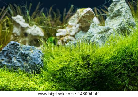 image of of aquatic plant in fish tank