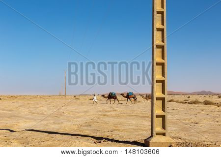 caravan of camels goes on the background of a transmission line in the Sahara desert, Morocco