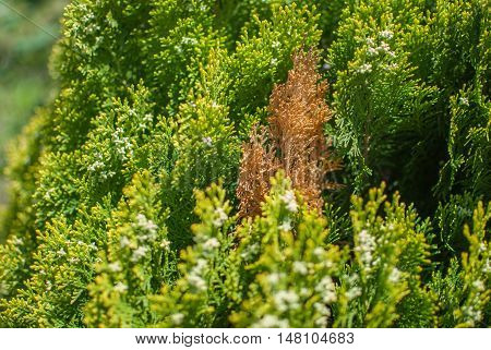 Fall, autumn, leaves, leaf background. A tree branch with autumn leaves on a blurred background. Landscape in autumn season
