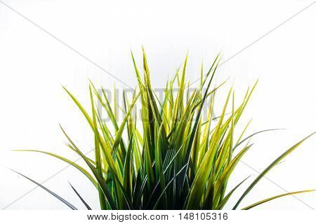 Artificial Grass Plastic Green Light Isolated White Background Decoration
