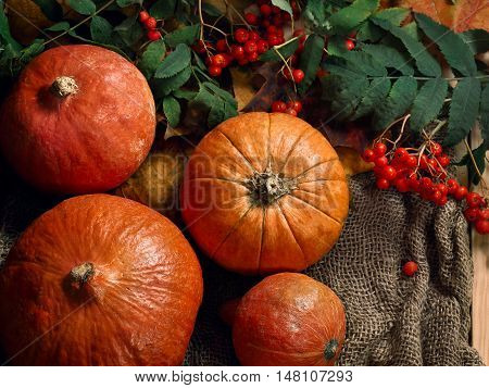 Still life with pumpkins and berries of mountain ash. Autumn mood. Halloween