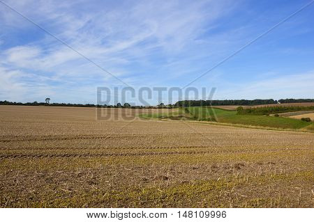 Farming Landscape In Late Summer