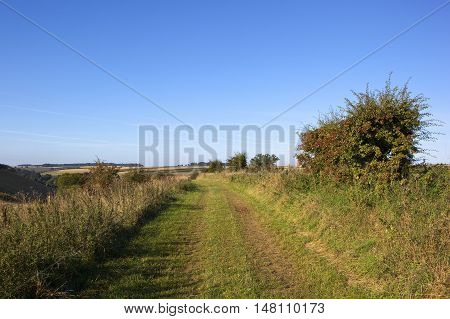 Bridleway And Hawthorn Hedgerow