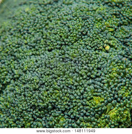 Close Up On Fresh Broccoli Solated Background, Selective Focus