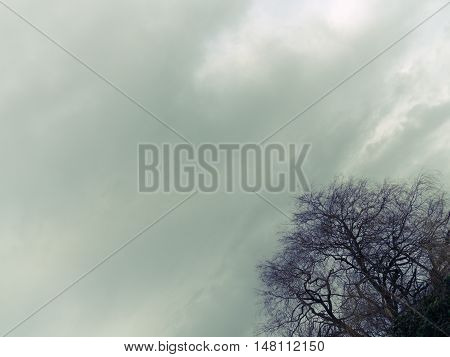 Leafless tree with the cloudy background in the evening