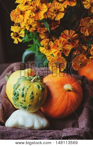 fresh assorted pumpkins and squash picked up in basket at country house with seasonal flowers