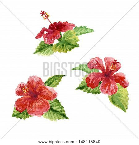 Raster vivid set of three pink hibiscus flowers isolated on white. Design and floral element image for ads tags and covers decoration of different printed production. Composition image.