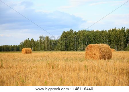 Wheat Straw Roll Field Green Trees Blue Sky Farming Growing Harvesting