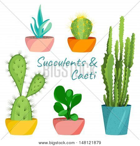 Succulents and cacti vector set on white background. House pot plants. Home interior floral design elements. Green plants, flowers and nature concept. Tropical exotic botany collection.