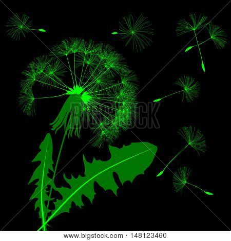 Green blow dandelion silhouette isolated on black. Vector illustration
