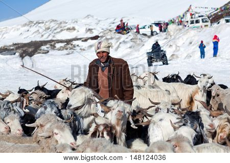 ROHTANG LA, INDIA - JUNE 9, 2012: Drower with goats walking across Rohtang La Pass in the Indian Himalayas, Jammu and Kashmir.