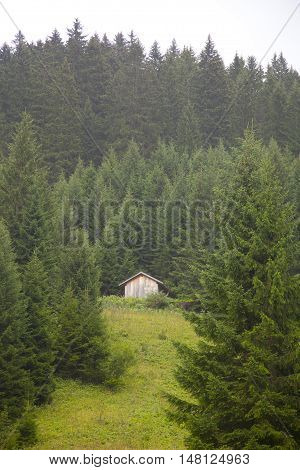 Wooden cabin with green mountain in Tirol Austria