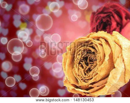 beautiful dry white and red rose on bubble with blur heart bokeh background
