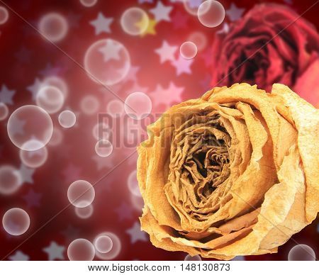 beautiful dry white and red rose on bubble with blur star bokeh background