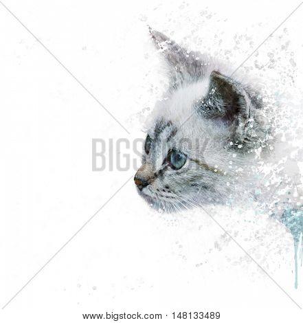 Digital Painting of White Kitten portrait