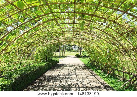 fresh cucurbit tunnel garden on bright sky